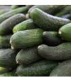 Salátová okurka Delikates - prodej semen - 20 ks