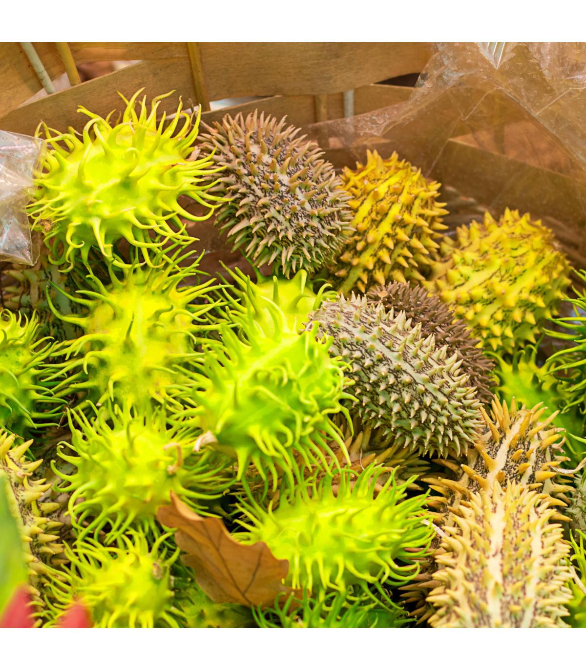 Okrasná okurka - Cucumis insignis - prodej semínek - 6 ks