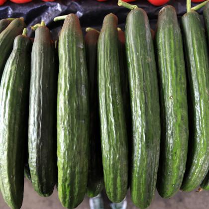 Okurka Hadovka Paska F1 - okurka setá salátová - semena okurky - 4 ks