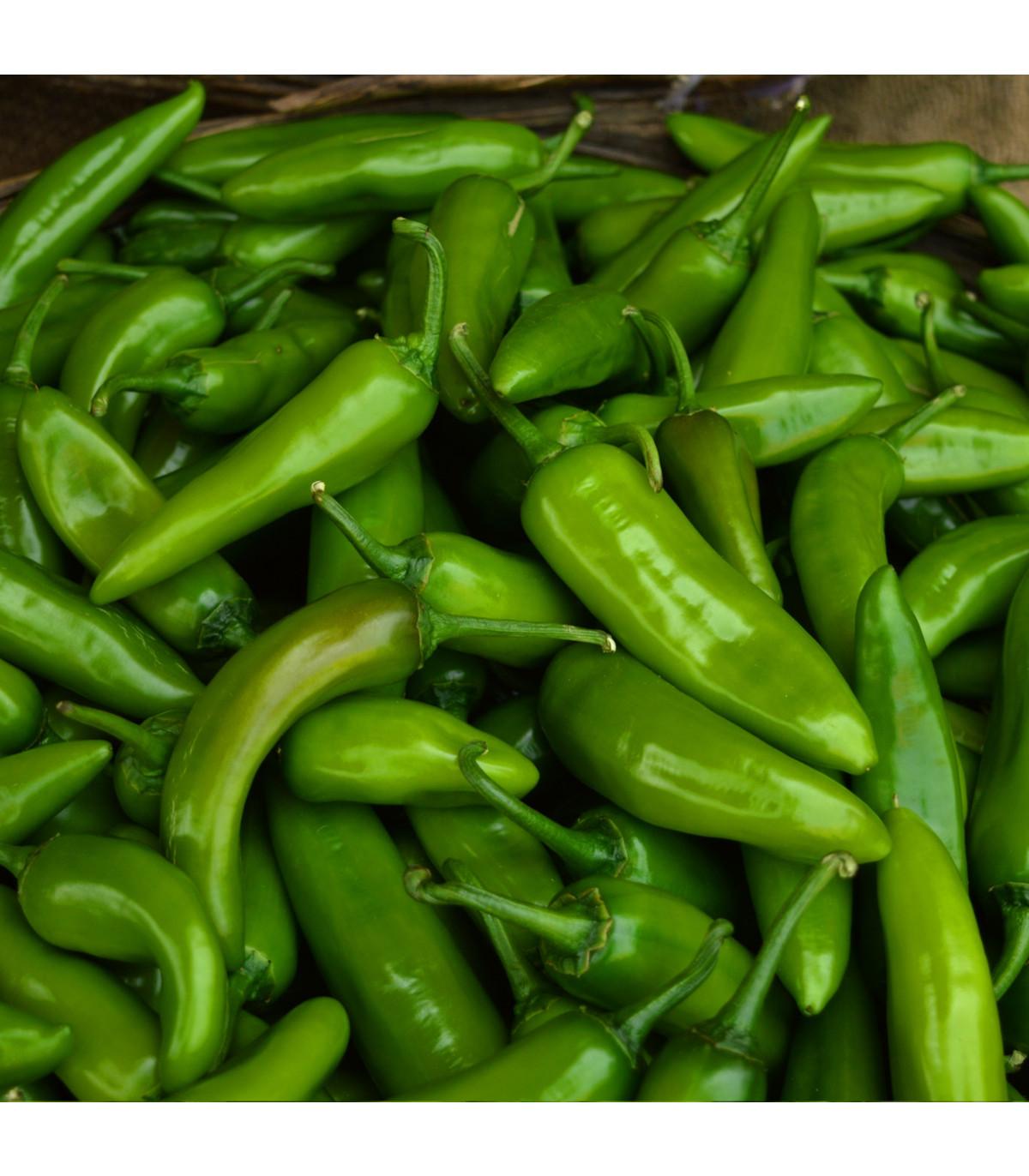 Chilli Velký Jim - Capsicum annuum - osivo chilli - 7 ks