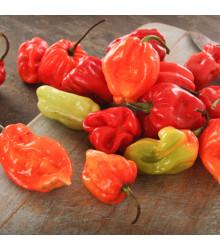 Chilli Scotch Bonnet oranžové - Capsicum chinense - prodej semen chilli - 6 Ks