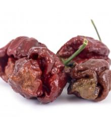 Chilli Trinidad Scorpion Moruga Chocolate - Capsicum sinense - nejpálivější chilli - prodej semen chilli - 5 ks