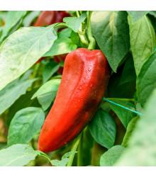 Paprika roční Radmila F1 - Capsicum annuum - semena paprik - 15 ks