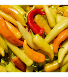 More about Chilli Aji Crystal - Capsicum baccatum - osivo chilli - 7 ks