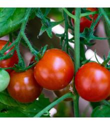 Rajče balkónové Balkonstar - Solanum Lycopersicum - semena rajčat - 10 ks