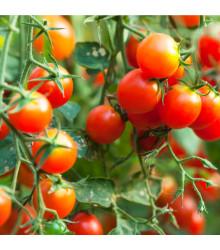 Červená Cherry rajčátka - prodej semen rajčat - 6 Ks