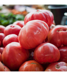 Rajče Oxheart Pink - Lycopersicon esculentum - semena rajčat - 5 ks