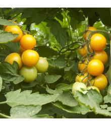 More about Rajče zlaté Golden Currant - Lycopersicon Esculentum - semena rajčat - 5 ks