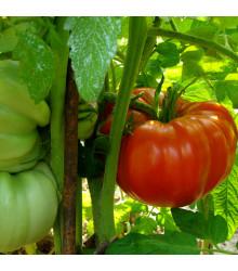 Rajče Soldaki - Lycopersicon Esculentum - semena rajčat - 7 ks