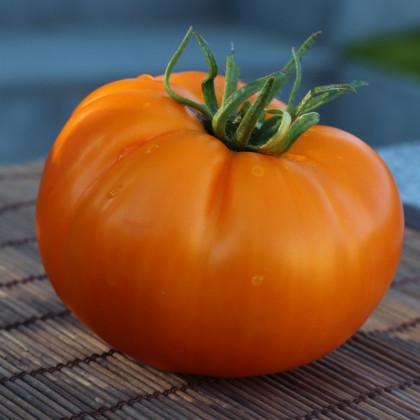 Rajče Wellington F1 - Solanum lycopersicum - osivo rajčat - 7 ks