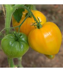 Rajče Oranžová jahoda - Lycopersicon lycopersicum - osivo rajčat - 6 ks