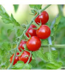 Rajče Cherolla F1 - Lycopersicum Esculentum - osivo rajčat - 5 ks