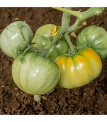 Rajče Brandywine žluté - Lycopersicon esculentum - osivo rajčat - 7 ks