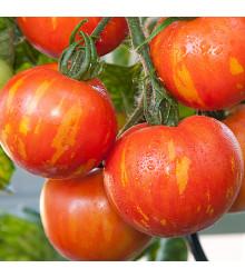 Rajče Červená zebra - Lycopersicon Esculentum - osivo rajčat - 6 ks