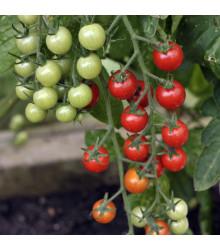 Rajče Supersweet F1 - Lycopersicon esculentum - semena rajčat - 6 ks