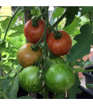 Rajče - Tigrella - semena rajčat - 6 ks