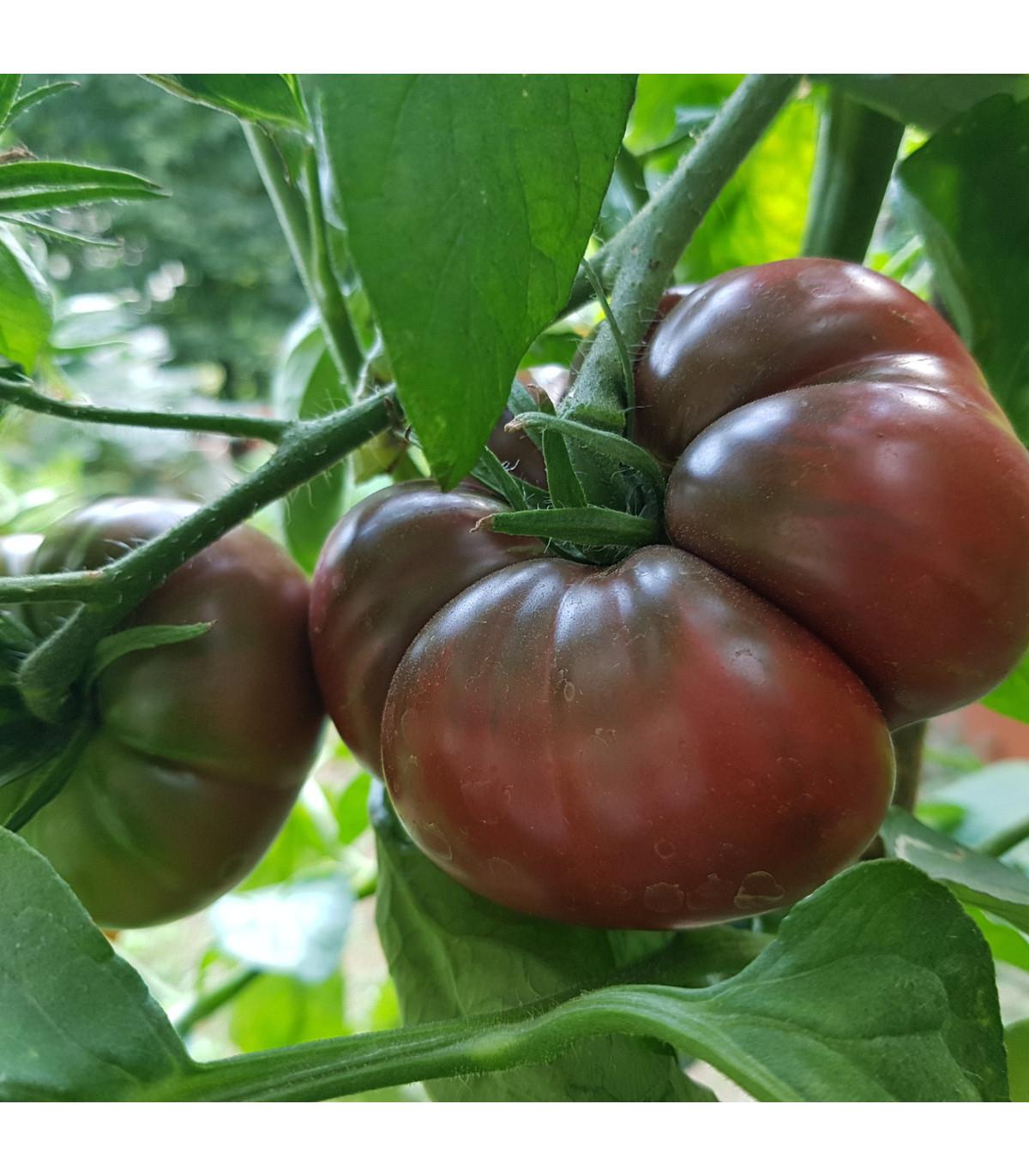 Rajče Černý Krim - Lycopersicon esculentum - osivo rajčat - 7 ks