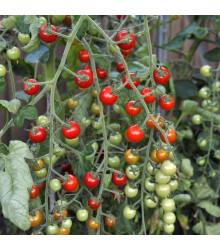 More about Rajče Sweet Million F1 - Lycopersicon Lycopersicum - semena rajčat - 5 ks