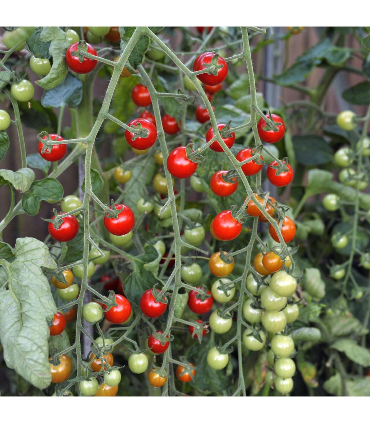 Rajče Sweet Million F1 - Lycopersicon Lycopersicum - osivo rajčat - 5 ks