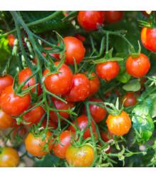 Rajče Sweetie - Lycopersicon Esculentum - osivo rajčat - 6 ks