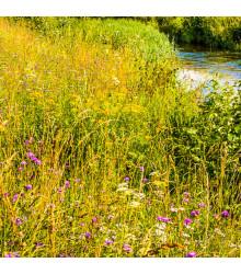 Vlhká louka květnatá - semena lučních květin a trav - 10 g