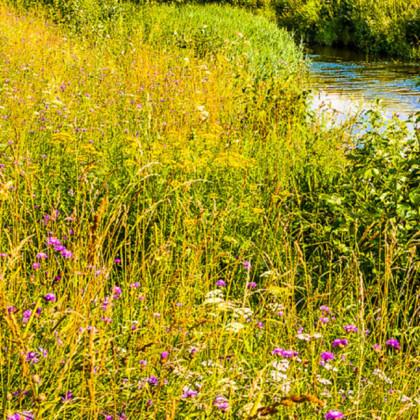 Vlhká louka květnatá - osivo Planta Naturalis - směs lučních květin a trav - 50 g