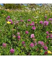 Louka na výsušnou půdu - osivo Planta Naturalis - směs lučních květin a trav - 10 g