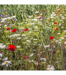 Luční květy na obohacení porostu - semena lučních květin - 10 g