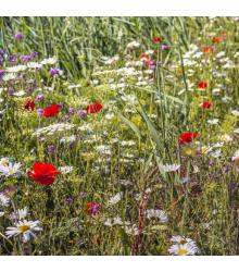 Luční květy na obohacení porostu - semena lučních květin a trav - 50 g