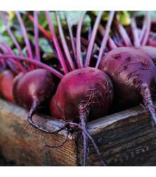 Řepa salátová Pablo F1 - červená kulatá - Beta vulgaris - semena řepy - 50 ks