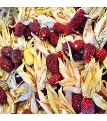 Kukuřice jahodová - rostlina Zea mays multicolor - semena - 20 ks