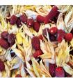 Kukuřice jahodová- Zea mays multicolor- semena- 2 g