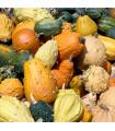 Okrasné tykvičky velkoplodé - směs - prodej semen tykviček - 3 gr