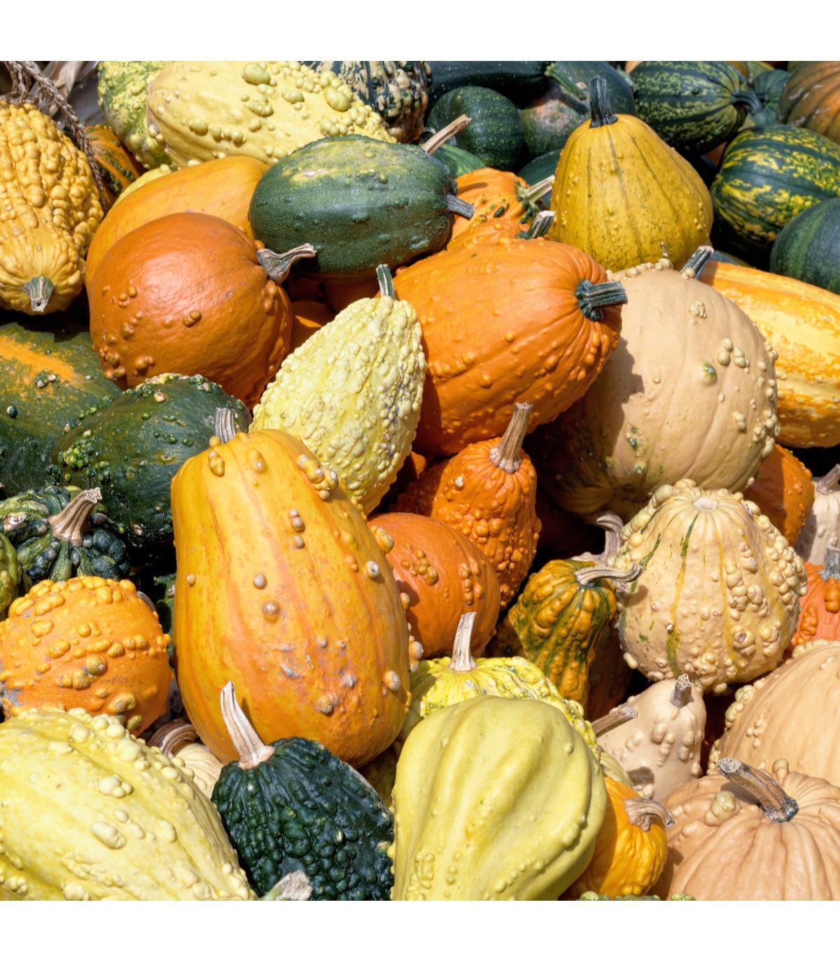Okrasné tykvičky velkoplodé - směs - prodej semen tykviček - 25 ks