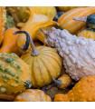 Okrasné tykvičky - prodej semen tykviček - 3 gr