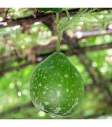 Indická okurka Permaroma F1 - Lagenaria siceraria - semena tykve - 6 ks
