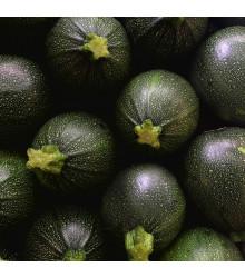 Cuketa Eight Ball F1 kulatá - Cucurbita pepo - semena cukety - 4 ks
