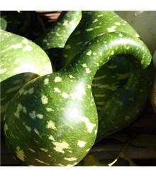 More about Okrasná tykev Cobra - Cucurbita Lagenaria - prodej semen - 5 ks