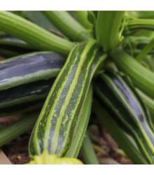Cuketa Striato D´Italia - Cucurbita pepo L. - semena tykve - 8 ks