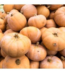 Dýně muškátová - prodej semen dýně - 5 ks