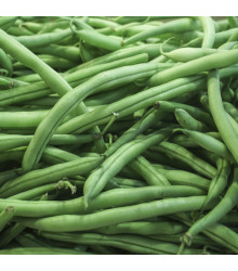 Fazolové lusky Negra - Phaseolus vulgaris - semena fazolu - 10 ks