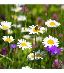 Letničky vábící hmyz - prodej semen letniček - 1 gr