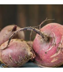 BIO Řepa salátová Chioggia - Beta vulgaris - prodej BIO semen - 40 ks