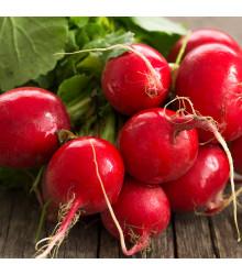 BIO Ředkvička červená Sora - prodej BIO semen ředkvičky - Raphanus sativus - 40 ks