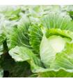 BIO Zelí bílé Filderkraut - prodej BIO semen zelí - 0,8 gr