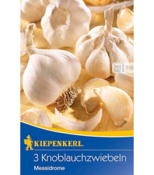 Sadbový česnek Messidrome - cibule - 3 ks v balení