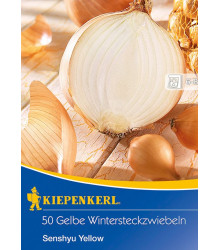 Cibule sazečka Senshyu Yellow - Allium cepa - cibulky sazečky - 50 ks