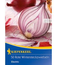 Cibule sazečka červená Electric - Allium cepa - cibulky sazečky - 50 ks