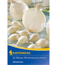 Cibule sazečka Silvermoon - Allium cepa - cibulky sazečky - 50 ks
