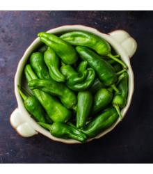 Chilli Pimentos de Padron - Capsicum annuum - semena chilli - 7 ks